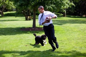 barack-obama-and-his-dog-bo-1174375__340